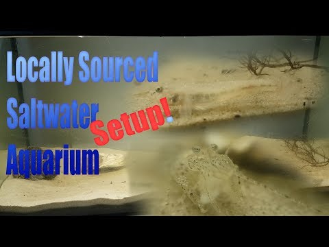 Natural Saltwater Aquarium Setup - Locally Sourced! (North Sea)
