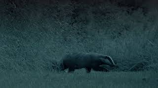 Give Badgers a Brake