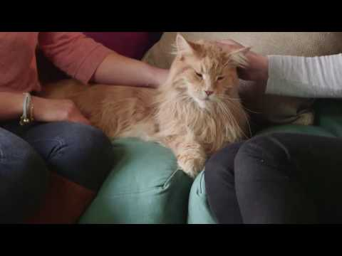 FRONTLINE UK - How to prevent a flea infestation