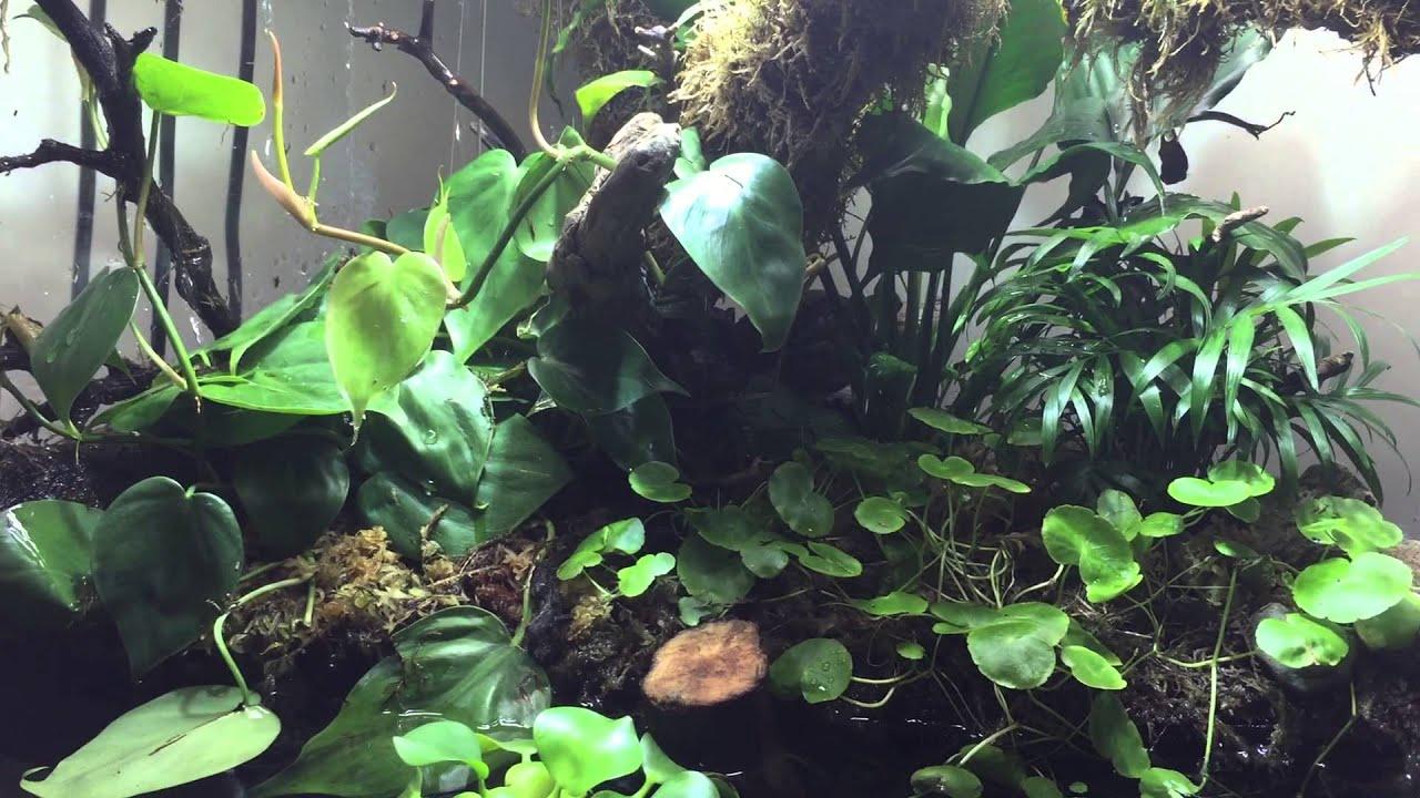 Fish tank terrarium - Terrarium Aquarium Implied Shoreline