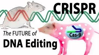 What is CRISPR? Animation.