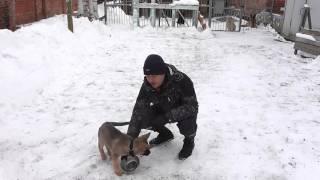 как кормить щенков ч 2