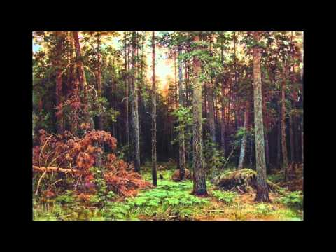 Martyn Bates -- In the Dark Pine-Wood
