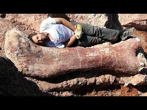 Палеонтология. Рассказывает биолог и палеонтолог Елена Борисовна Наймарк.