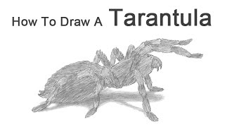 a tarantula spider drawing lesson