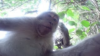 Monkey Steals GoPro Hero 3+