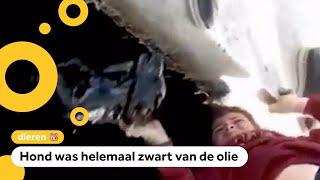 Jongen redt puppy uit olieput in Turkije