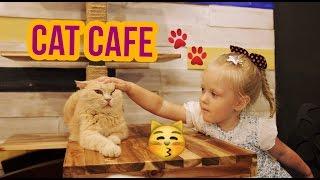 супер настя! БЛОГ! кафе с кошками! cat cafe! СЕУЛ! метро Сеула!