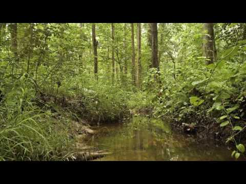 Welcome video for Adkins Arboretum