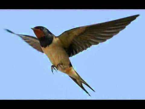 The Moody Blues The Swallow