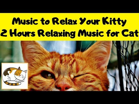 Music to Relax Your Kitty - 2 Hours Relaxing Music for Cat with Anxiety