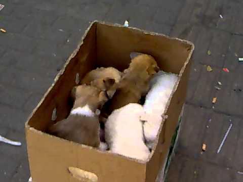 beijing street doggies for sale