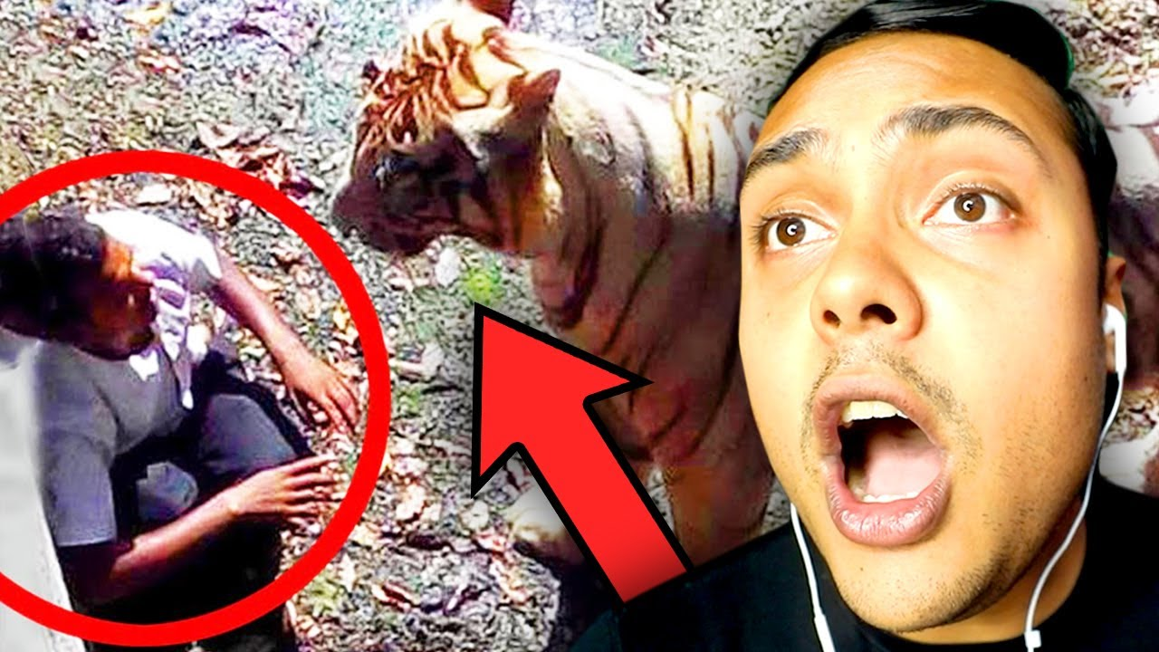 THE MOST INSANE ANIMAL ENCOUNTERS
