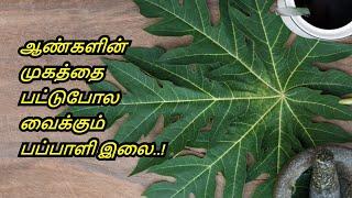 Benefits of Papaya Leaf in Tamil | Pappali Elai Payangal | Dengue fever | Healthy Life - Tamil.