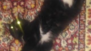 Найден кот в Ревде. Он ищет добрых, любящих и ответственных хозяев. Отзовись, добрая душа! 🐈🐱🐾