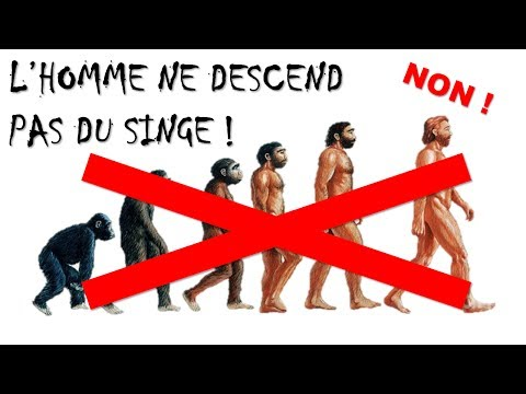 NON ! L'HOMME NE DESCEND PAS DU SINGE !