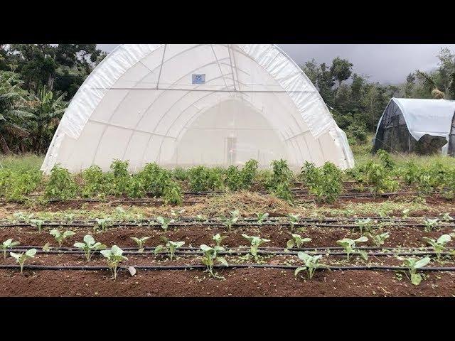 Rebuilding Lives and Livelihoods on Dominica