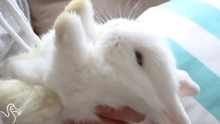 Here's Why You Shouldn't Lay Bunnies On Their Backs