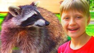 Влог Игорь и Арина нашли Енотов на детской площадке | Видео для детей