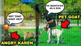 Taking My PET GOAT to the CITY DOG PARK!!! (PITBULL ATTACKS) - Bad Idea