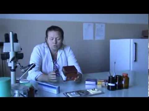 Липаза: норма, повышенный и пониженный уровень липазы в крови
