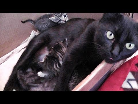 Kitty Cate Drops In To Nurse Her Kittens