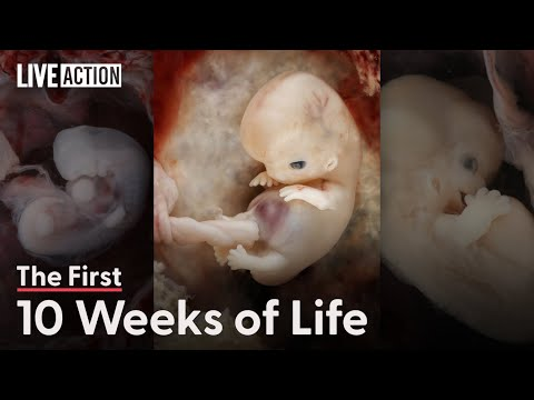 This Is The First 10 Weeks Of Human Life