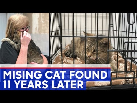 Pet Central - Cat Reunited With Owner in New York After 11 Years!!