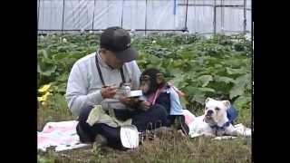 Phim hài Nhật Bản - Chó & Khỉ thông minh phần 1 - Tập 1 [HD]