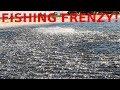 Download WILD Fish Frenzy Blitz!
