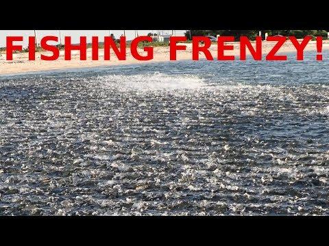 WILD Fish Frenzy Blitz!