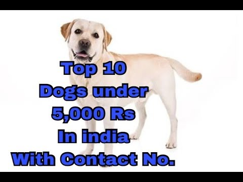 Top 10 dogs under 5,000 Rs in india with Contact No. || price in discription ||