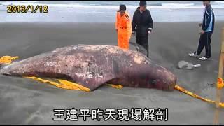 鯨吞一米長魚 貪吃噎死 thumbnail