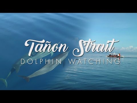 Playtime with Dolphins in Tañon Strait