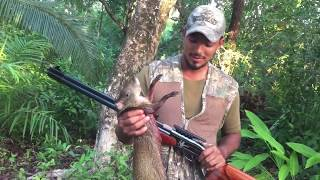 Airgun Agouti Hunt VLog
