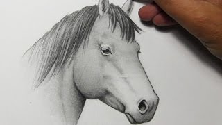 Drawing Time Lapse: Horse
