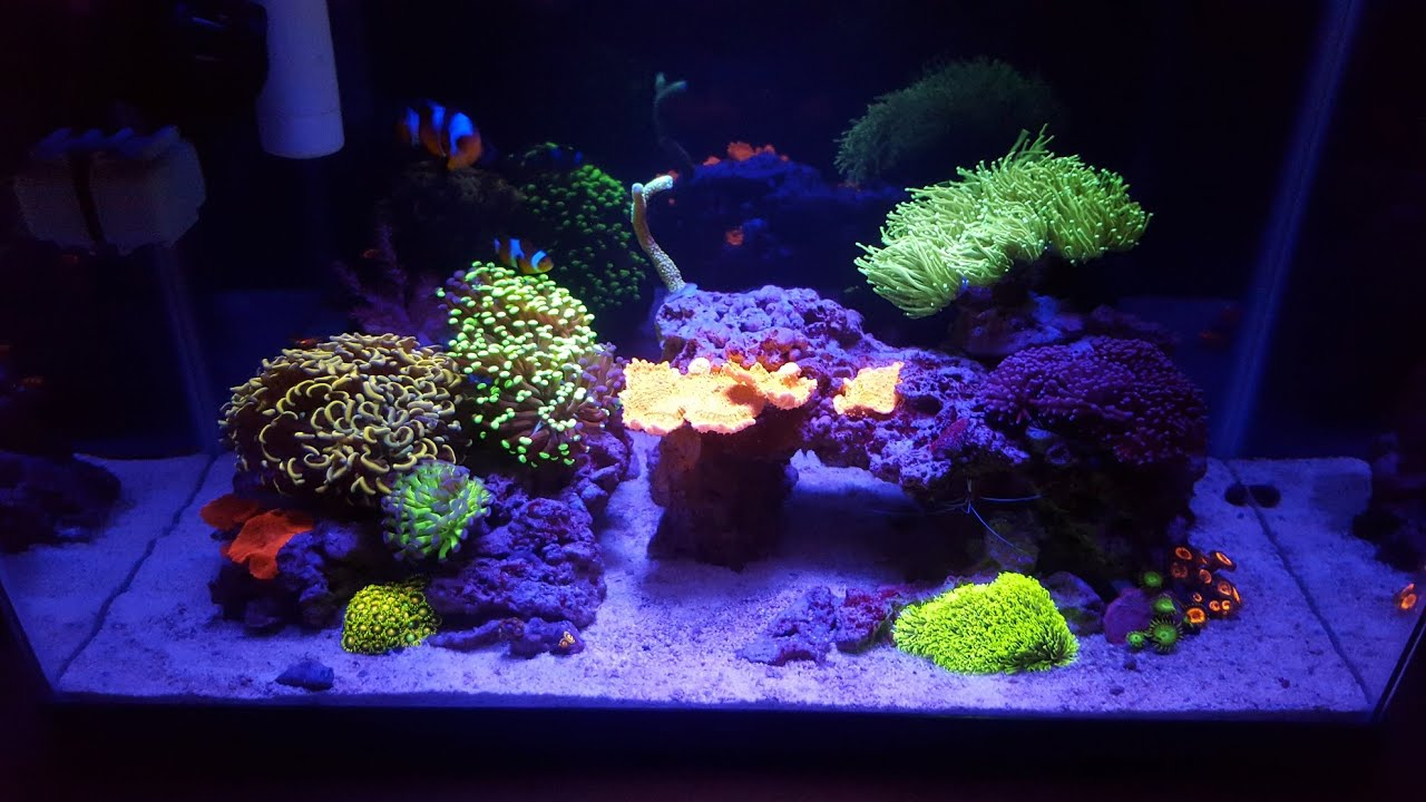 10 gallon saltwater reef tank youtube for Saltwater fish for 10 gallon tank
