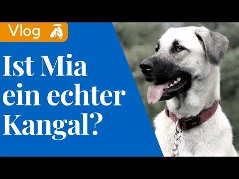 Vlog#1 Ist Mia reinrassig oder ein Mischling? / Mia and Me DogTV