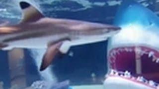 Shark Tank Reveal | Tanked!