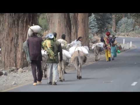 Carrying WFP/US AID Rice Home In Ethiopia