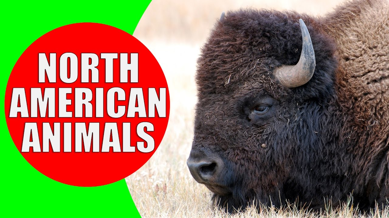 American.Animals