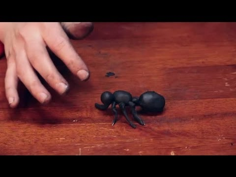 How To Build A Model Of An Ant Sculpting Crafts Amp More