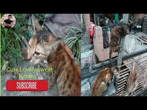lovely cats funny kittens | cat kitten meow | kittens meowing | Sweet cat kittens | funny cats angry