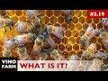 Beekeeping Mystery - Mutant Diseased Queen?