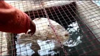 Floating Stone In Ram Setu Rameshwaram