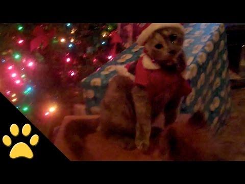 Christmas-Animals-Compilation