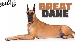 Great Dane dog breed details   Tamil