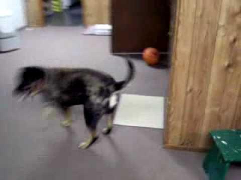 buckeye and basketball