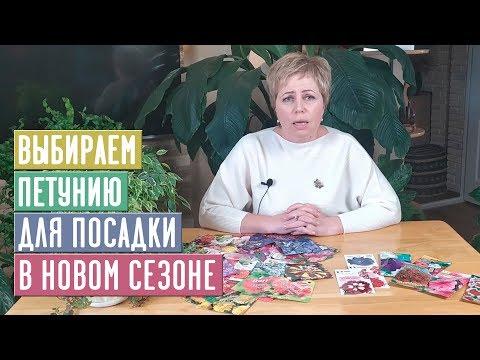 ПЕТУНИЯ  Самые обильно цветущие серии / Садовый гид