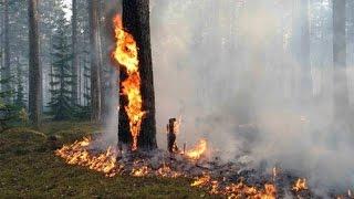 Семья Бровченко. 9 мая! Пожар в лесу возле нашего села! Как горит лес. (05.16г.)